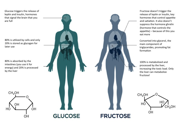 Glucose and Fructose overview